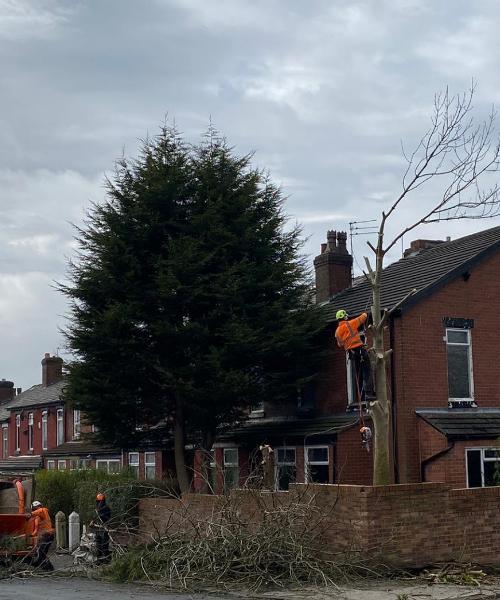 TREE LOPPING UK
